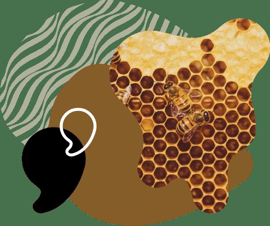 palvelumme-beehive